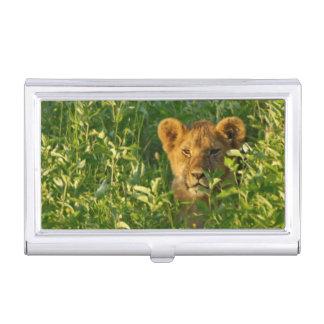 Young Lion (Panthera Leo) Stalking, Ngorongoro Business Card Holder