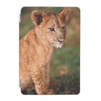 Young lion sitting iPad mini cover