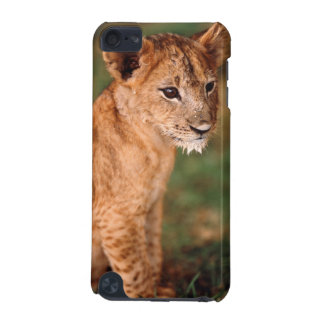 Young lion sitting iPod touch (5th generation) case