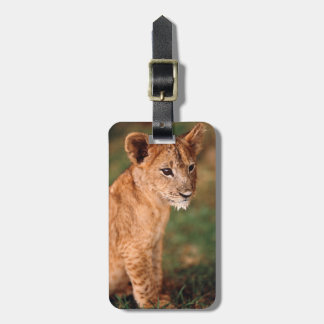 Young lion sitting luggage tag