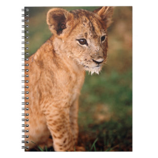 Young lion sitting spiral notebook