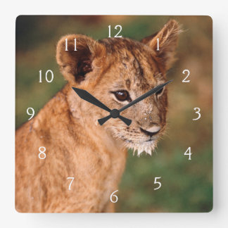 Young lion sitting square wall clock