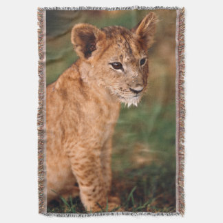 Young lion sitting throw blanket