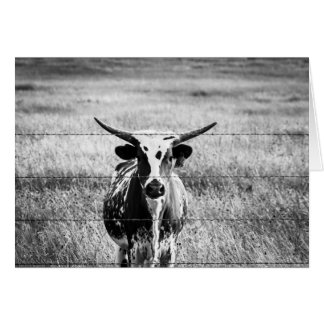 Young Longhorn Card