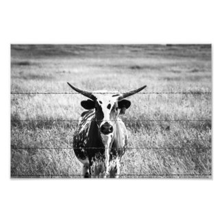 Young Longhorn Photo Print