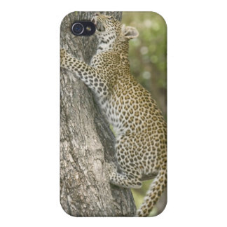 Young male leopard (Panthera Pardus) climbing iPhone 4/4S Covers