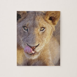 Young Male Lion Jigsaw Puzzle