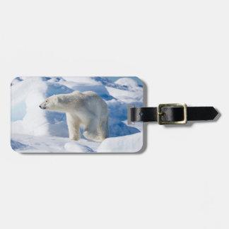 Young Male Polar Bear Luggage Tag
