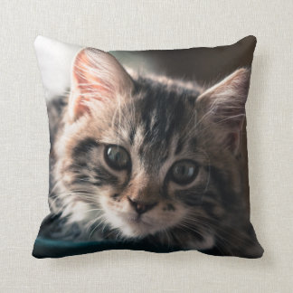 Young Male Tabby Cat 2 Cushion