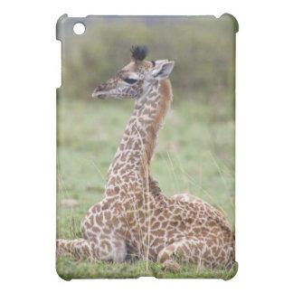 Young Masai Giraffe (Giraffa camelopardalis iPad Mini Covers