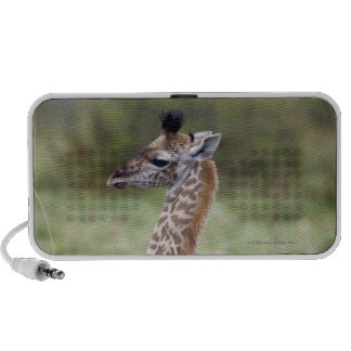 Young Masai Giraffe (Giraffa camelopardalis Speaker System