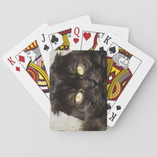 Young Munchkin Cat Relaxing Outside Playing Cards