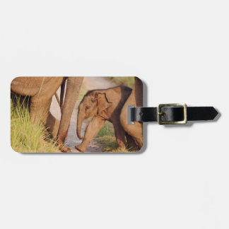 Young one of Indian Asian Elephant Bag Tag