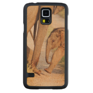 Young one of Indian Asian Elephant Carved Maple Galaxy S5 Case