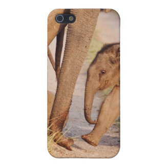 Young one of Indian Asian Elephant Case For The iPhone 5