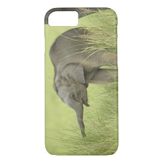 Young one of Indian / Asian Elephant,Corbett iPhone 8/7 Case