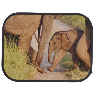Young one of Indian Asian Elephant Floor Mat