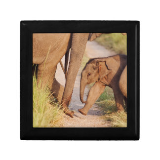 Young one of Indian Asian Elephant Gift Box