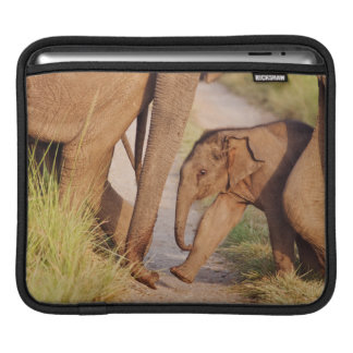 Young one of Indian Asian Elephant iPad Sleeve