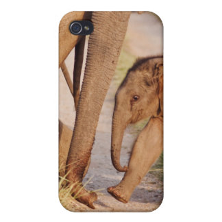 Young one of Indian Asian Elephant iPhone 4 Cases