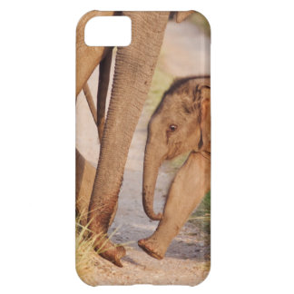 Young one of Indian Asian Elephant iPhone 5C Case