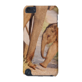 Young one of Indian Asian Elephant iPod Touch (5th Generation) Covers