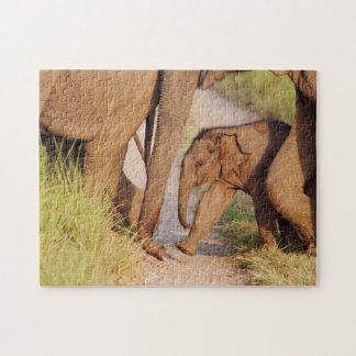 Young one of Indian Asian Elephant Jigsaw Puzzle