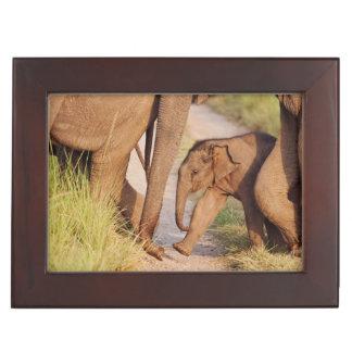 Young one of Indian Asian Elephant Keepsake Box