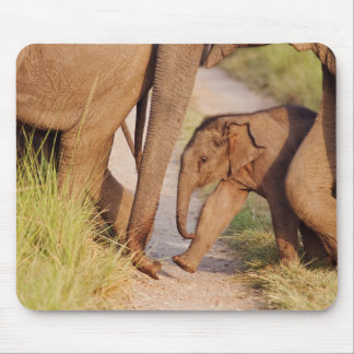 Young one of Indian Asian Elephant Mouse Mat