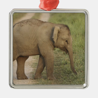 Young one of Indian / Asian Elephant on the Christmas Ornament