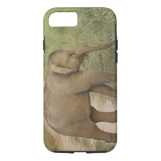 Young one of Indian / Asian Elephant on the iPhone 8/7 Case
