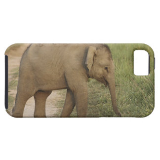 Young one of Indian / Asian Elephant on the Tough iPhone 5 Case