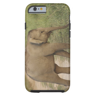 Young one of Indian / Asian Elephant on the Tough iPhone 6 Case