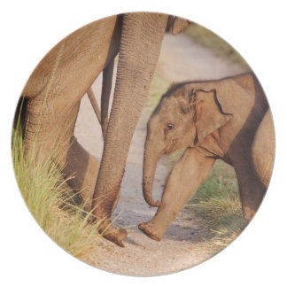 Young one of Indian Asian Elephant Plate