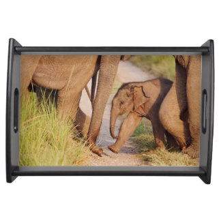 Young one of Indian Asian Elephant Serving Tray