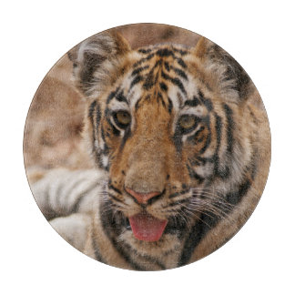 Young one of Royal Bengal Tiger Cutting Board