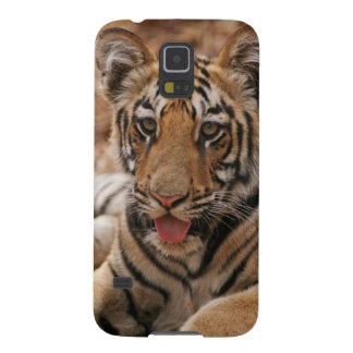 Young one of Royal Bengal Tiger Galaxy S5 Cover