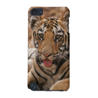Young one of Royal Bengal Tiger iPod Touch (5th Generation) Cover