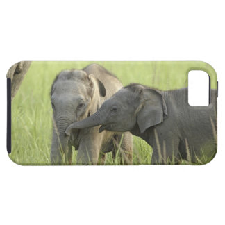 Young ones of Indian / Asian Elephant Case For The iPhone 5