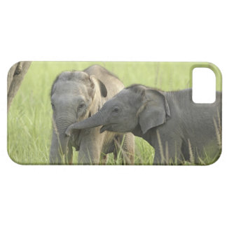Young ones of Indian / Asian Elephant iPhone 5 Cover