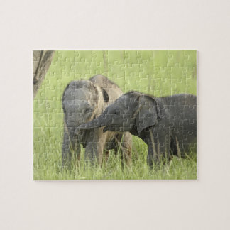 Young ones of Indian / Asian Elephant Jigsaw Puzzle