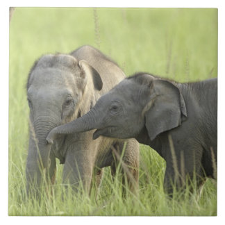 Young ones of Indian / Asian Elephant Large Square Tile