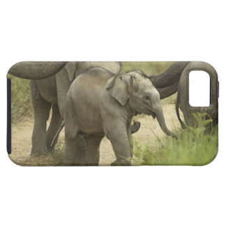 Young ones of Indian / Asian Elephant on the iPhone 5 Cover