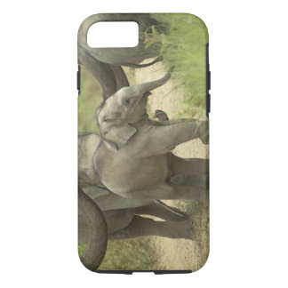 Young ones of Indian / Asian Elephant on the iPhone 8/7 Case