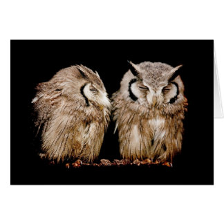 Young Owlets on Dark Background Card