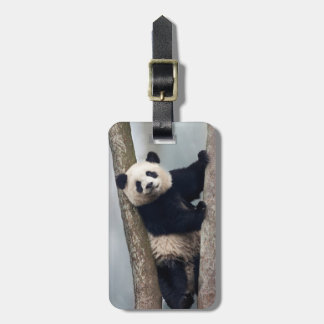 Young Panda climbing a tree, China Luggage Tag