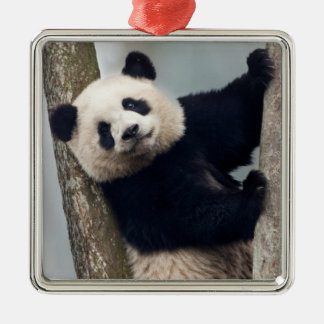 Young Panda climbing a tree, China Silver-Colored Square Decoration