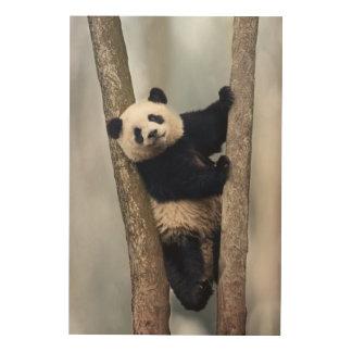 Young Panda climbing a tree, China Wood Canvas