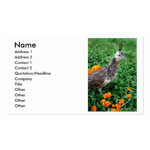 Young peacock Green Grass Orange Flowers Business Cards