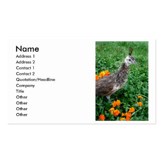 Young peacock Green Grass Orange Flowers Pack Of Standard Business Cards